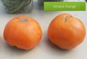 Amana Orange Tomato seeds