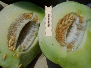 Honey Dew Melon seeds